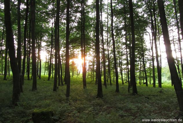 Wald an der Einhornhöhle