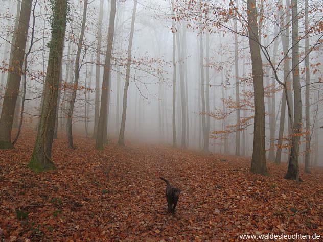 Großheppacher Wald