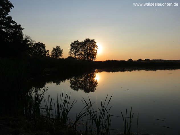 Moorhofweiher im Abendlicht